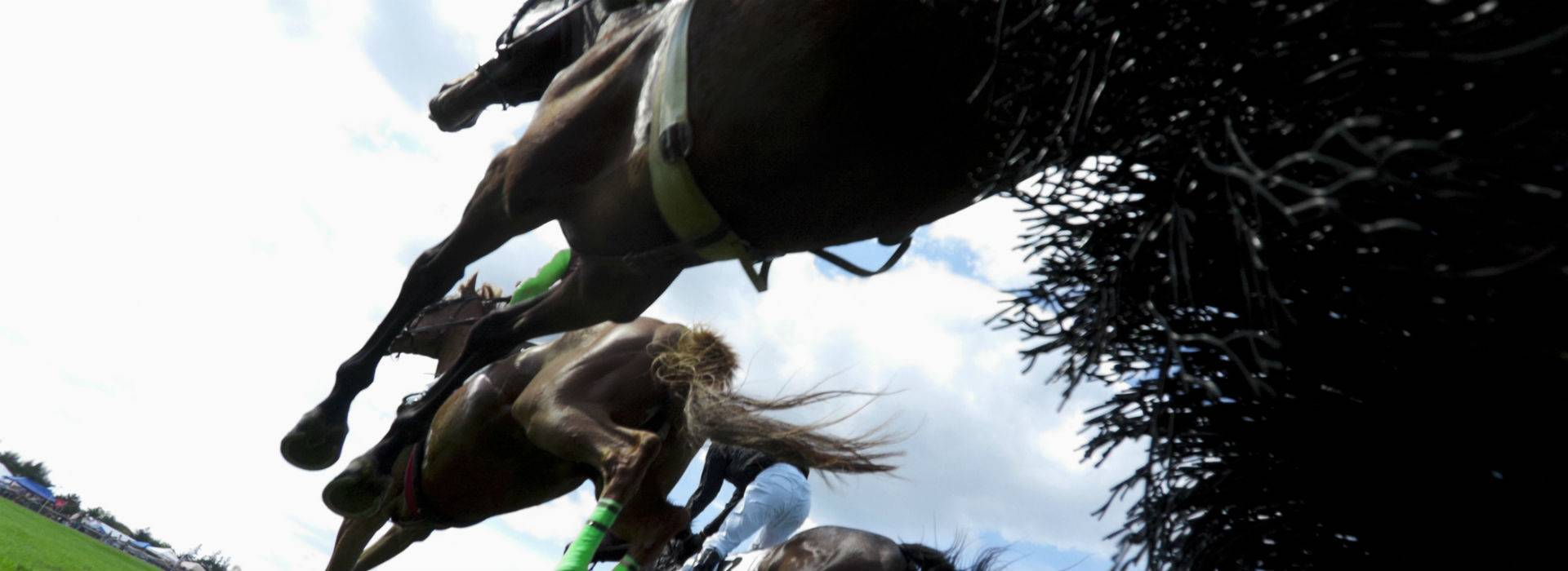 Bedale Point to Point Tweetstake blog post