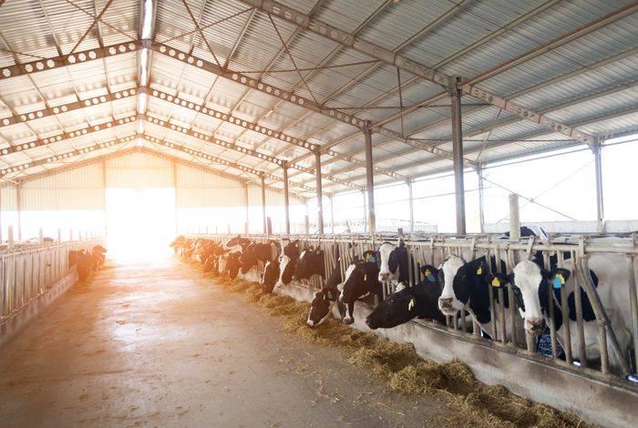 Livestock Heat Stress blog post